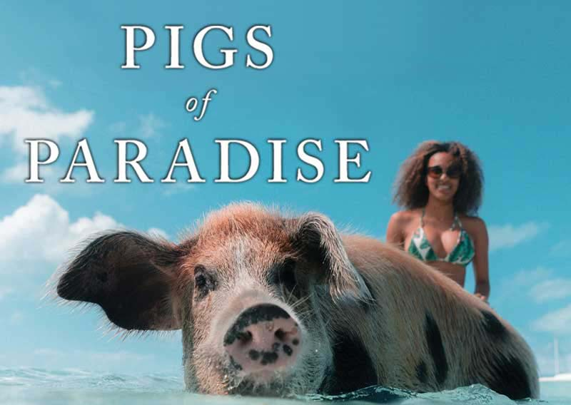 Pigs of Paradise – Book